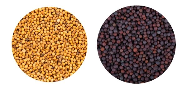 Mustard seeds picture